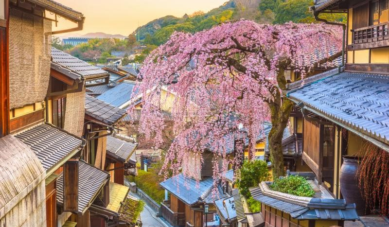 Hana - kyoto news standard