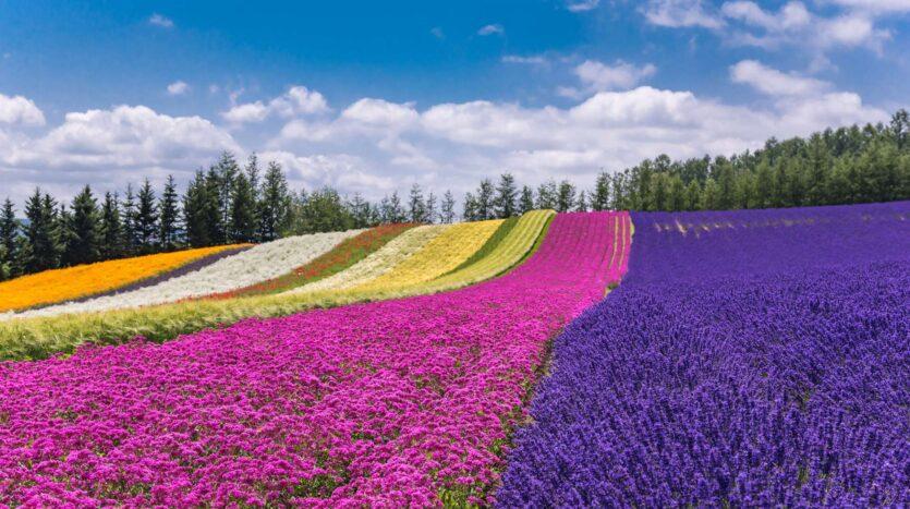 Japan Farms Image